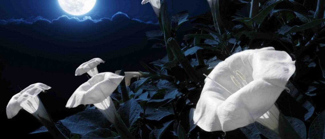moonlight-garden